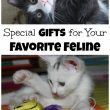 special-gifts-for-your-favorite-feline-pin