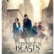 Fantastic Beasts and Where to Find Them Pre-Order! DVD, Blu-ray & Digital HD! FREE PRIME SHIPPING!
